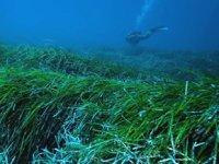 Neptün topları, su altındaki milyonlarca mikroplastiği hapsediyor