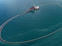 Karadeniz'de balıklar tersine göçe başladı