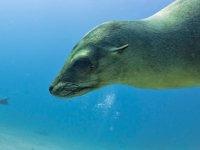 Deniz aslanına tüberküloz teşhisi konuldu