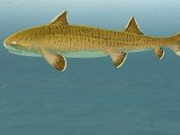 Almanya'da 150 milyon yıllık köpek balığı fosili keşfedildi