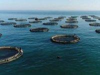 Doğu Karadeniz'in 2020'de su ürünleri ihracatı yüzde 79 arttı