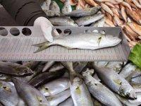Gaziosmanpaşa'da balık tezgahlarına denetim yapıldı