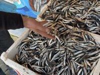 Düzceli balıkçılar yasağın kalkmasını bekliyor