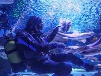 Dalgıçlar, köpek balıklarını elleriyle besliyor
