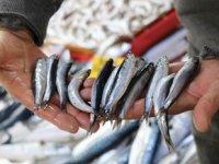 Karadeniz ve Egeli balıkçılar arasında hamsi polemiği başladı