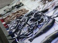Karadenizli balıkçılar hamsinin yolunu gözlüyor