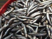 Çanakkale'de havalar ısındı, balık fiyatları düştü