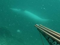 Çanakkale Boğazı'nda ters yüzen yunus, sualtı kamerasıyla görüntülendi
