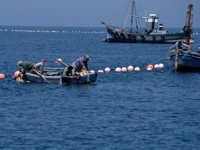 WWF: Akdeniz'in en az üçte biri etkin şekilde korunmalı