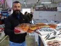Kırlangıç balığı, balık av sezonunun sonlarına doğru ortaya çıktı