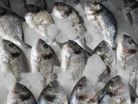 Sinop'ta tezgahlar havuz balıklarına kaldı