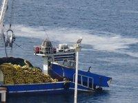 Deniz salyası, balıkçının kabusu oldu