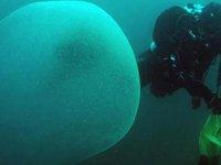Akdeniz çevresinde de görülen dev baloncukların sırrı çözüldü
