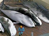 Japonya, 120 adet minke balina avlamayı hedefliyor