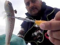 Zehirli trakonya balığına karşı 'ayakkabı giyin' uyarısı yapıldı