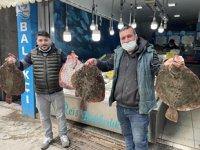 Karadeniz'de kalkan balığı bereketi yaşanıyor