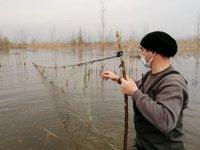 Efteni Gölü'nde 800 metre ağ ele geçirildi
