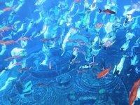 Çin'deki deniz kızı gösterisi rekor kırdı