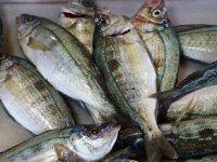 Tezgahların yeni gözdesi menekşe balığı oldu