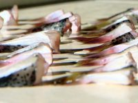 İstilacı balon balığını avlayana yeniden devlet teşviki verilecek