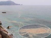 Deniz salyası, bu kez de Alanya'da ortaya çıktı