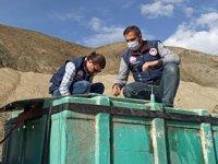 Alabalık tesislerine 2.4 milyon adet balık aktarıldı
