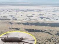 Deniz salyaları, canlıların sonu oluyor