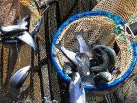 Manisa'dan 1 milyon dolarlık balık ihracatı gerçekleştirildi