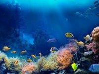 2020, okyanuslar için en sessiz yıl oldu
