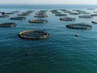 Anamur'da balık çiftliklerine Danıştay 'Dur' dedi