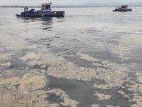 Marmara'daki müsilaj felaketinin nedeni Kurbağalıdere ve Haliç'in çamuru mu?