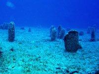 TÜDAV, '8 Haziran Okyanuslar Günü' için çevrimiçi panel düzenleyecek