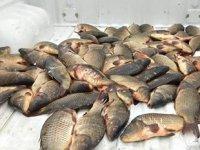 Kaçak avcılık yapan kişilere 19 bin lira para cezası kesildi