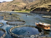 Elazığ'da 10 bin ton alabalık üretilmesi hedefleniyor