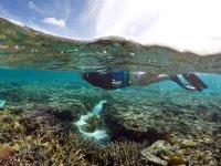 BM, Büyük Set Resifi'nin Dünya Mirası Listesi'ne alınması için çağrı yaptı