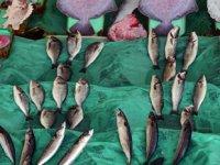 Müsilaj, tezgahlardaki balık satışlarını etkiledi