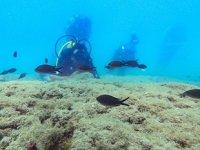 Doğu Akdeniz, su altı zenginliğiyle dalış tutkunlarını cezbediyor
