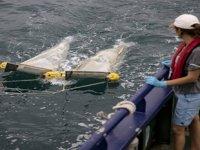 Plastik, denizlerin biyojeokimyasını etkiliyor