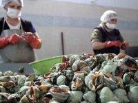 Türkiye'den yılın ilk 6 ayında 5.6 milyon dolarlık deniz salyangozu ihraç edildi