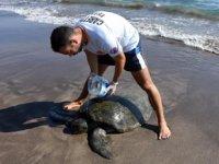 Kıyıya vuran yaralı deniz kaplumbağası tedavi altına alındı