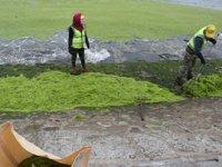 Çin'i deniz yosunu istila etti