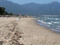 Carettalar, Kuşadası sahillerine yuva yaptı