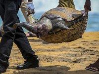 Sri Lanka'da yüzlerce deniz canlısı öldü