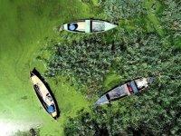 Alg patlaması, Uluabat Gölü'nü yeşile boyadı