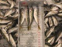 İstanbul'da yasak dönemde avlanılan yarım ton balığına el konuldu