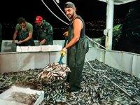 İstanbul'da balıkçılar ilk ağlarını bereketiyle çekti