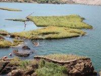 Çat Baraj Gölü'ndeki yüzen adalar sabitlenecek