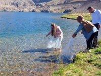 Sat Buzul Gölleri'ne 60 bin adet yavru sazan bırakıldı