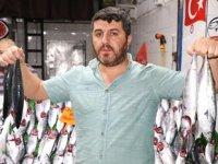 Hamsi ve palamut bolluğu balıkçıların yüzünü güldürdü