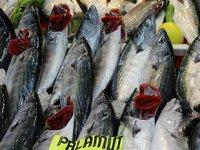 Palamut bolluğu, balıkçıların yüzünü güldürüyor